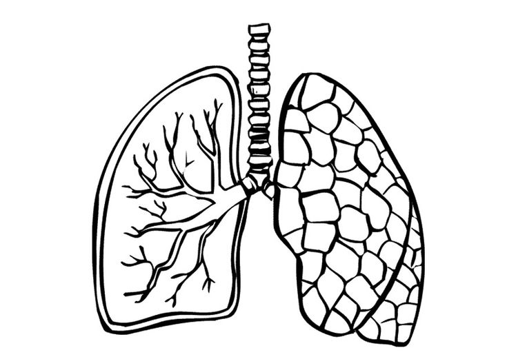 Super Coloring Page Lungs Auto Electrical Wiring Diagram Ranpur Mohammedshrine Wiring Digital Resources Ranpurmohammedshrineorg